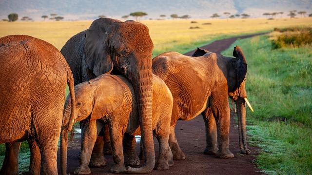 elephant-4120822_640.jpg